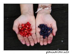 Jagode i borovnice