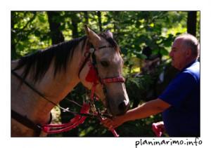 Konji i konjanici